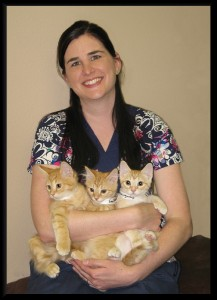 DR. RUPLE and LOA KITTENS
